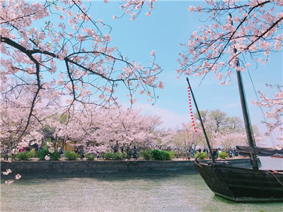Cherry blossom pink, the color of spring