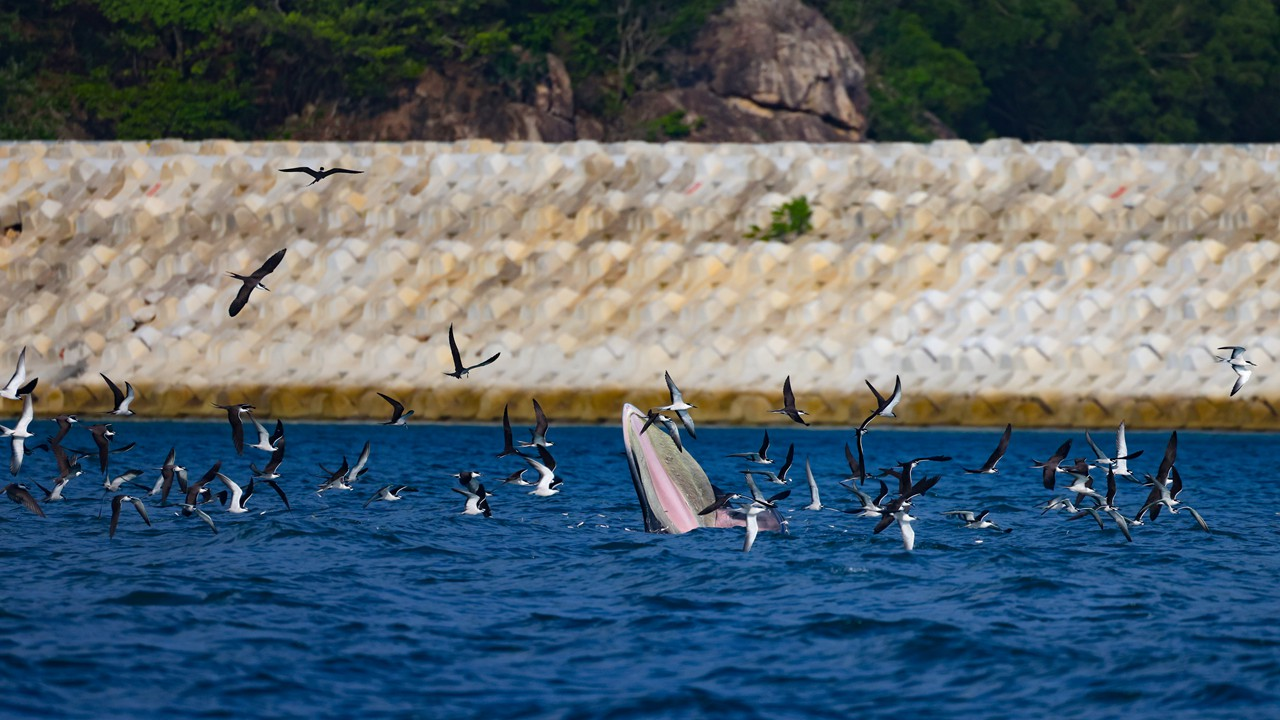 Dapeng makes concerted efforts for Bryde's whale's safety