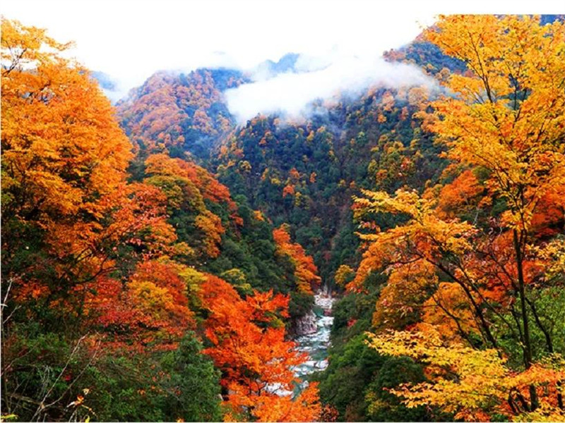 Lesser-known places to see fall foliage in China (II)